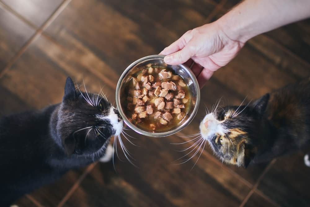 HOW To KEEP Cats From EATING EACH OTHER'S FOOD