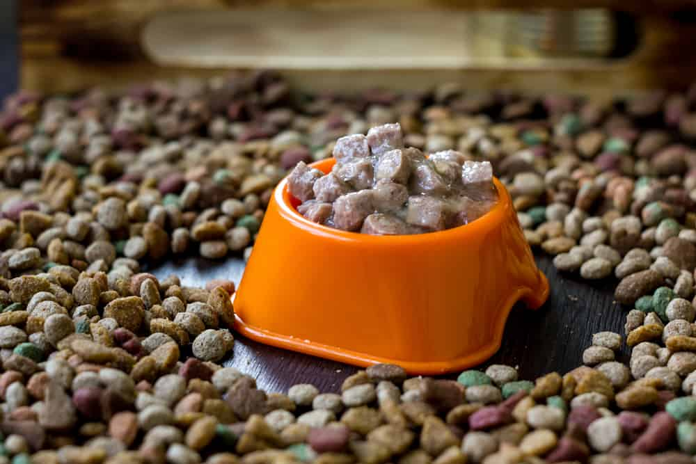 HOW To SOFTEN DRY Cat FOOD