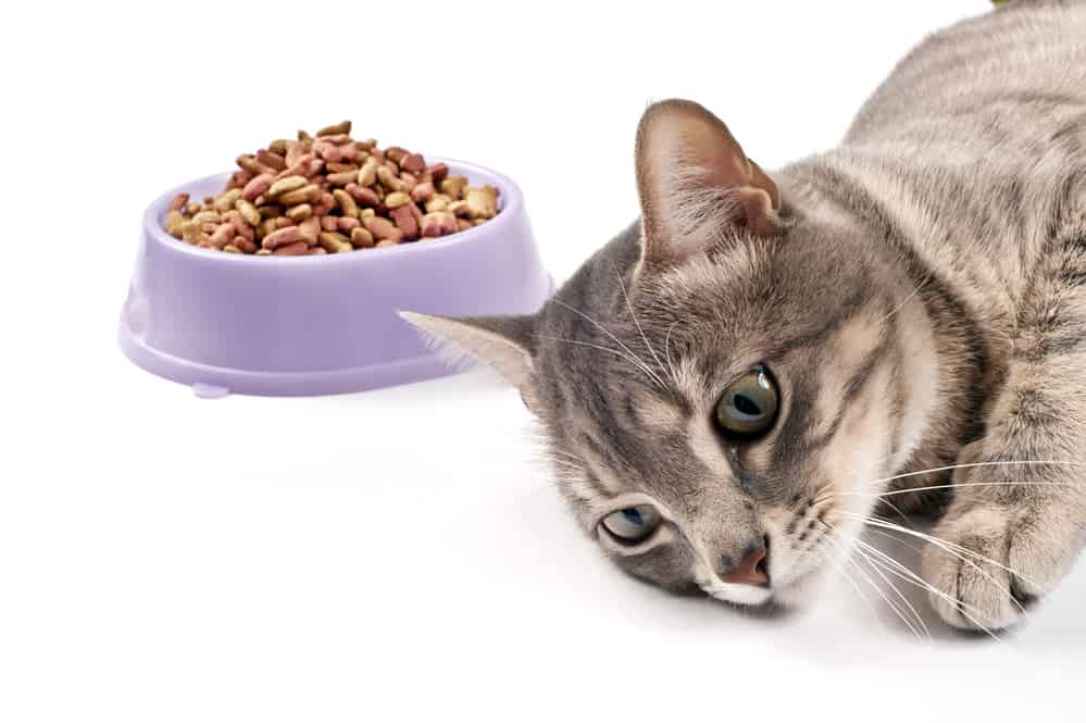 WHY Do Cats LAY DOWN When They EAT Or DRINK