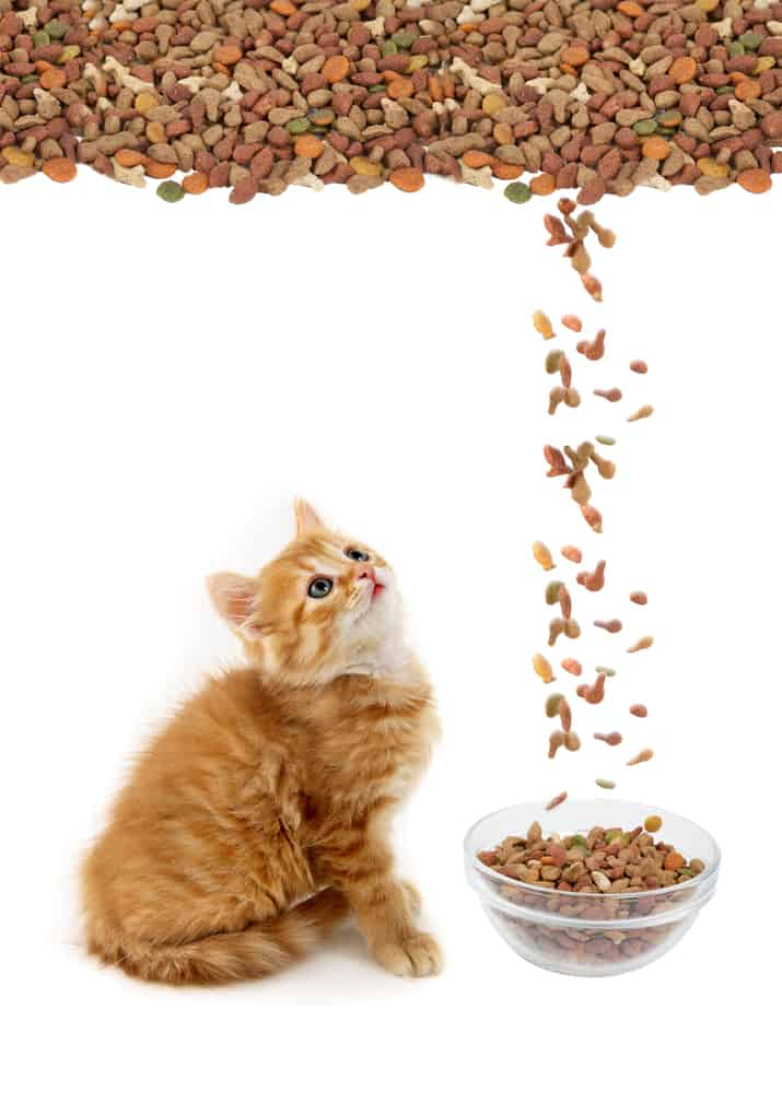 WHY Do Cats PLAY With Their FOOD
