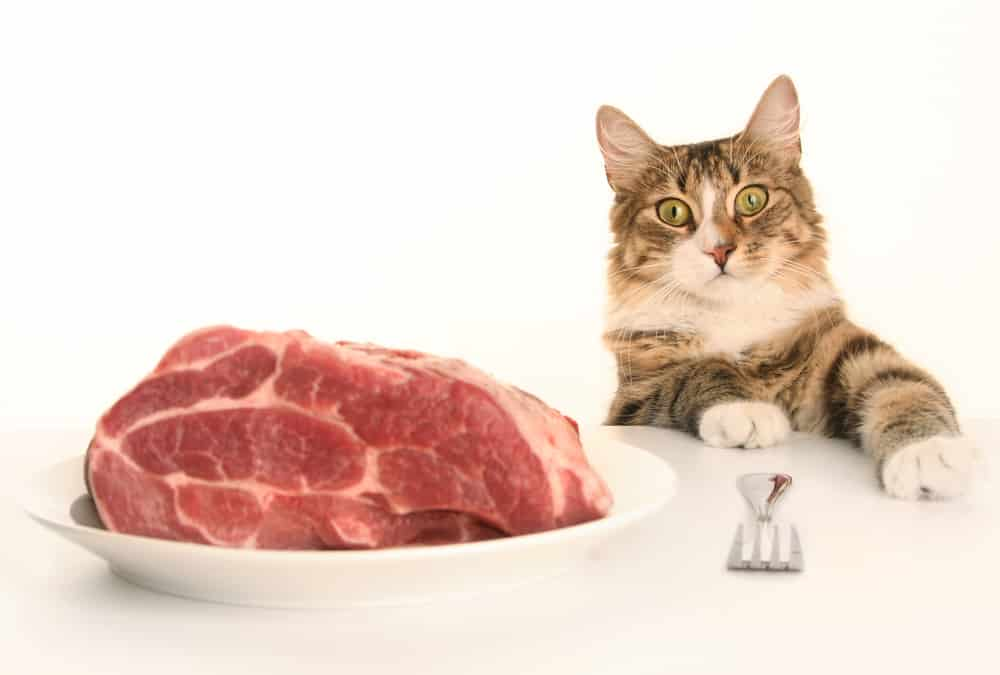 can cats eat raw cooked pork or pork rinds