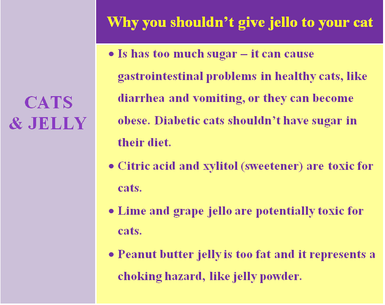 can cats eat jello