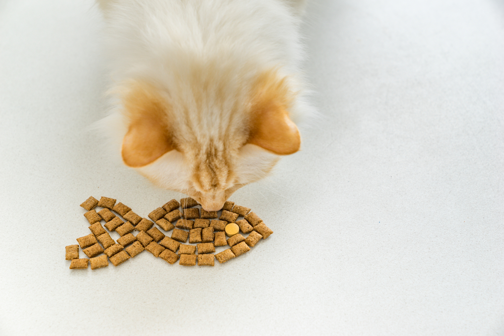 why do cats like treats more than food
